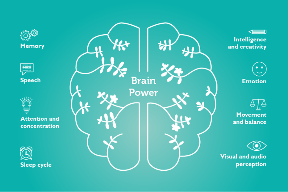 the importance of brain health