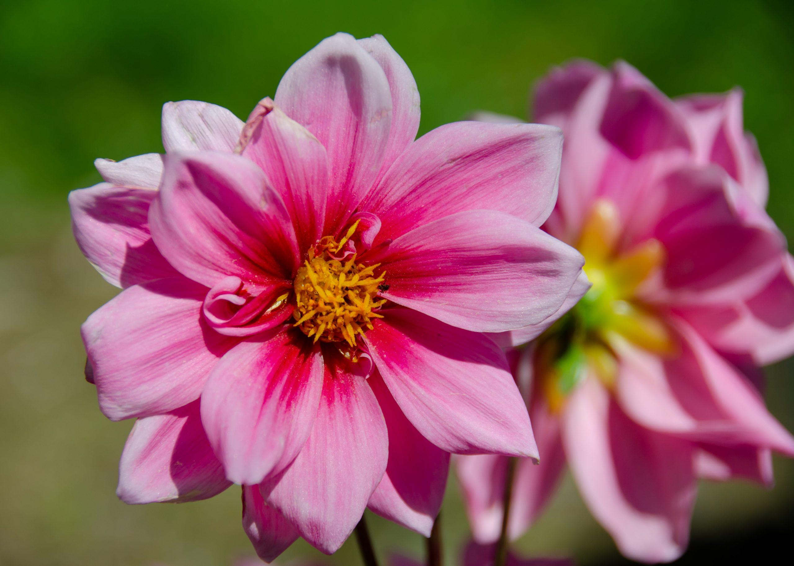 hay fever FAQs
